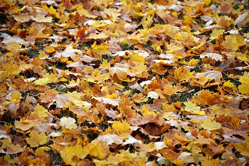 Autumn, Mood, Nature, Landscape, Tree, Leaves, Bright