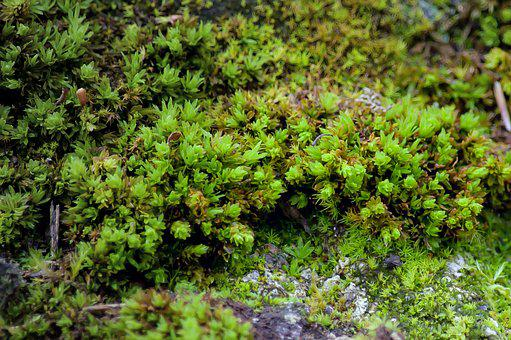 Moss, Plant, Close Up, Nature, Autumn, Green, Flora