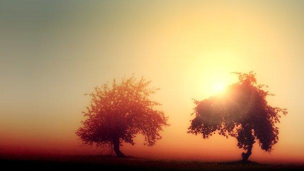 Dawn, Light, Trees, Fog, Ray Of Hope, Landscape, Nature