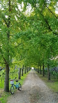 Ginkgo, Nature, Wood, Plants, Bike, Trail, Landscape