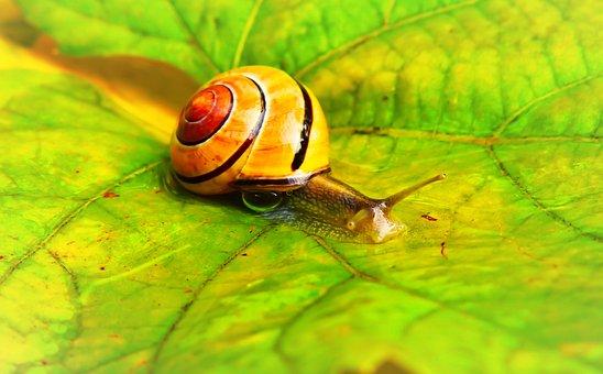 Wstężyk Huntsman, Molluscum, Leaf, Drops, Water, Rain