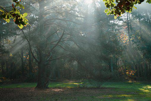 Sun Rays, Forest, Sun, Autumn, Trees, Sunlight, Rays