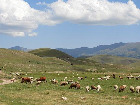 Mountains, Summer, Alpine Meadows, Goats, Sheep, Herd