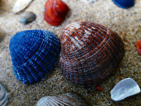 Shells, Sand, Sea, Nature, Holiday