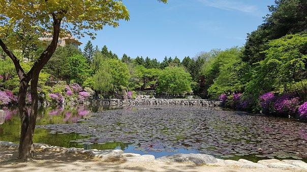 Lake, Nature, Scenery, Pond, Landscape, Spring, Idyllic
