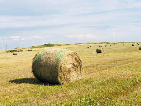 Hay, Bale, Field, Landscape, Straw, Rural, Countryside