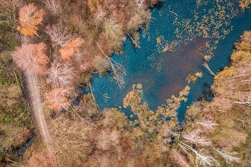 Forest, Way, Tree, Autumn, Lake, Stupidity, Foliage