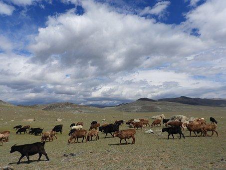 Flock, Sheep, Goats, Herd, Summer, Alpine Meadow