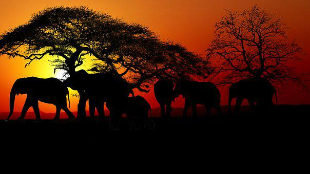 Sunset, Savannah, Elephants, Trees, Mammals, Nature