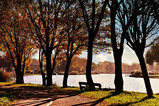 Water, River Bank, Tree, Bench, Resting Place, Peaceful