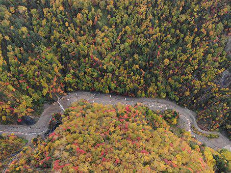 Natural, Autumn, Aerial, Trees, Landscape, Forest