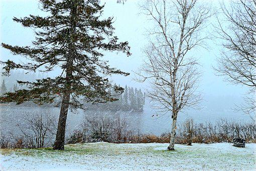 Landscape, Snow, Nature, Winter, Cold, Trees, Snowy