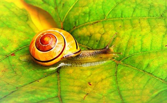 Wstężyk Huntsman, Molluscum, Leaf, Water, Rain, Autumn