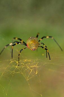 Spider, Macro, Web, Nature