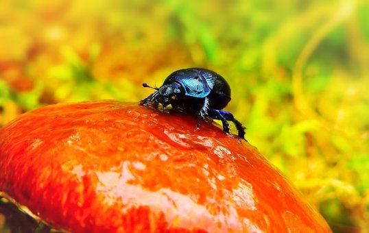 Forest Beetle, The Beetle, Mucus, Drains, Wet, Mushroom