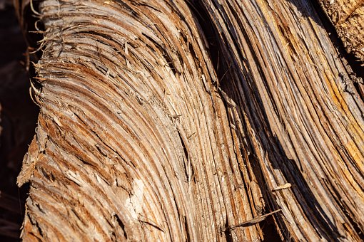 Wood, Structure, Grain, Annual Rings, Tree