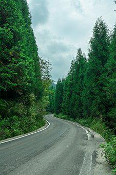 Woods, Highway, At The End, Guizhou, Qing Town