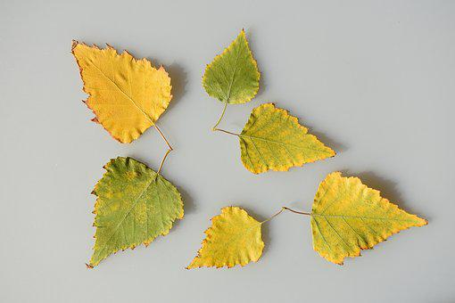 Sheet, Leaves, Yellow, Green, Multi Colored, Autumn