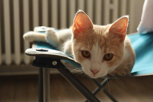Cat, Animal, Cats, Cute, Kitten, Animals, Close Up