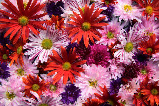 Asters, Chrysanthemums, Bouquet, Thank You, Greeting