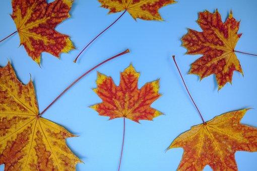 Leaf, Colorful, Color, Leaves, Autumn, Fall Foliage
