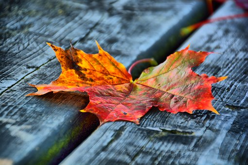 Leave, Leaf, Bank, Wood, Autumn, Yellow, Red, Nature