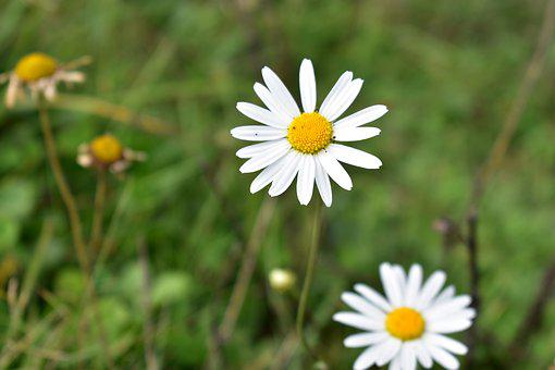 Flowers, Nature, Blossom, Spring, Garden, Yellow