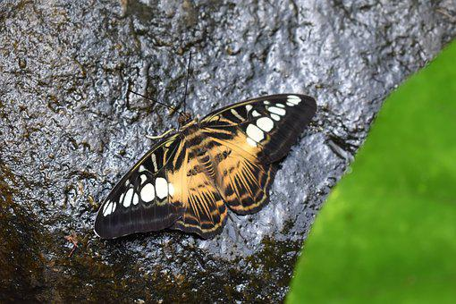 Butterfly, Insect, Rock