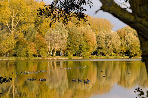 Pond, Lake, Woody, Fall, Colorful, Water, Nature
