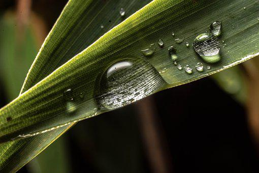 Macro, Drip, Drop Of Water, Close Up, Plant, Leaf