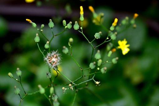 Flower, Plant, Garden, Flowers, Spring, Summer, Nature