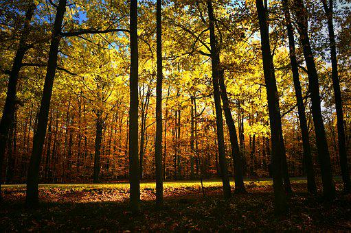 Forest, Deciduous Forest, Deciduous Trees, Trees, Light