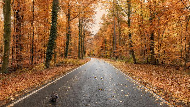 Hedgehog, Forest, Nature, Mammal, Road, Trees, Prieser