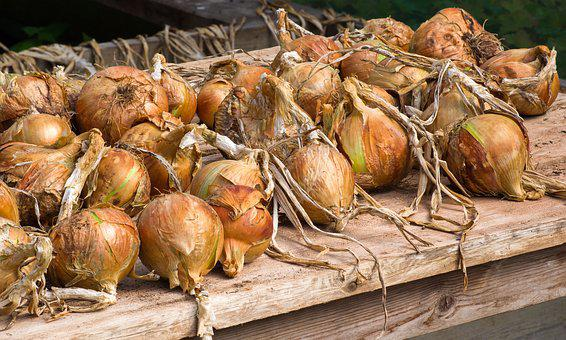 Onions, Vegetables, Food, Healthy, Fresh, Nutrition
