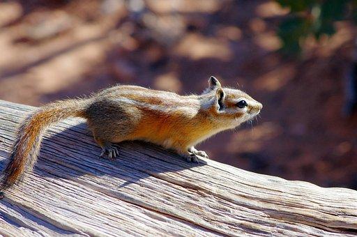 Chipmunk In Arches, Chipmunk, Rodent, Furry, Animal