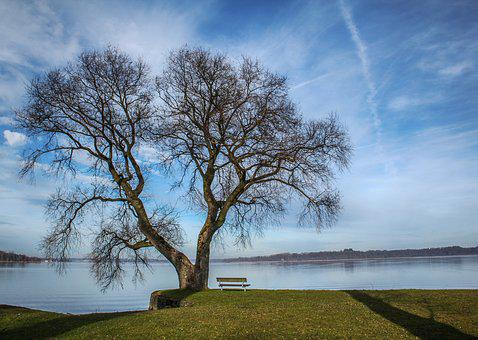 Tree, Bench, Lake, Sky, Clouds, Germany, Nature, Water