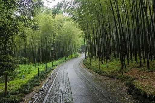 Hangzhou, The Cloud Dwelling And Bamboo Path, Green