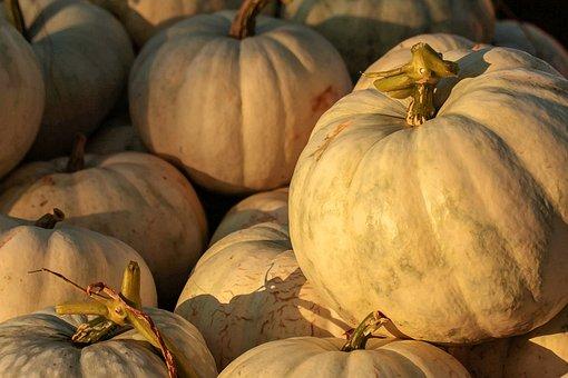 Pumpkin Patch, Harvest, Fall, Autumn, October, November