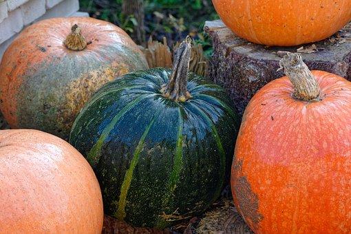 Pumpkin, Pumpkins, Green Pumpkin, Autumn, In The Fall