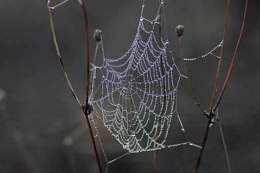 Spider Web, Drops, Wet, Dew, In The Morning, Water