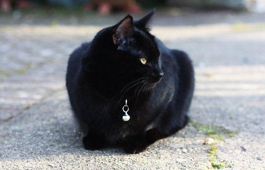 Cat, Black Cat, Black, Animal, Pet, Dark, Kitten