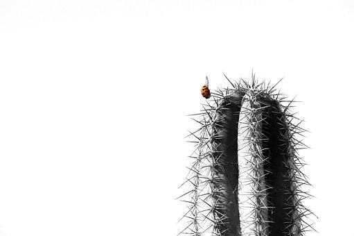 Cactus, Ladybug, Nature, Insect, Macro, Plant, Beetle