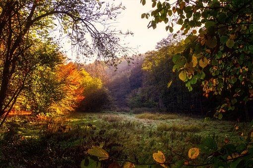 Forest, Glade, Light, Shadow, Mystical, Landscape