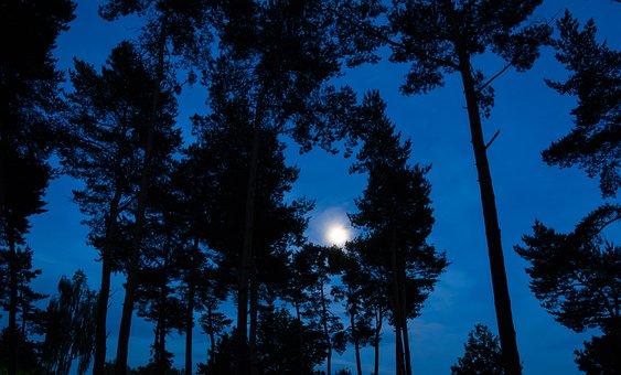 Moon, Nature, Night, Sky, Landscape