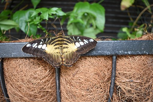 Butterfly, Insect, Leaves