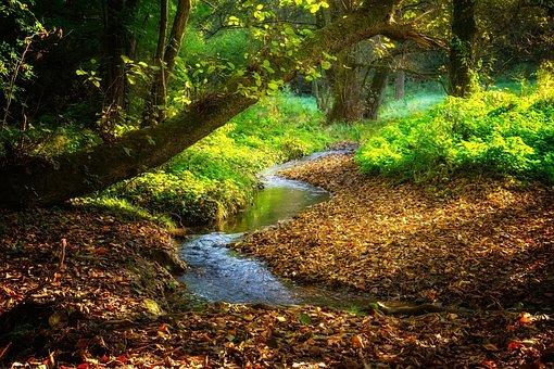 Landscape, River, Bach, Stream Autumn, Leaves, Color