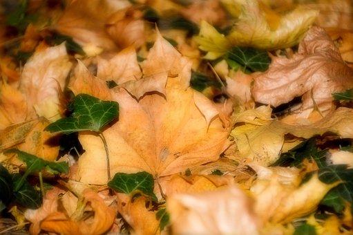 Leaves, Foliage, Fall, Color, Season, October, Soil