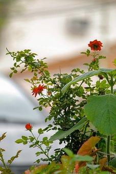Nature, Brazil, Leaf, Green, Plant, Natural, Flora