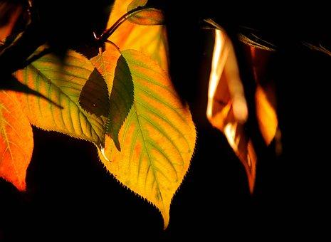 Autumn, Fall Foliage, Leaves, Nature, Fall Color