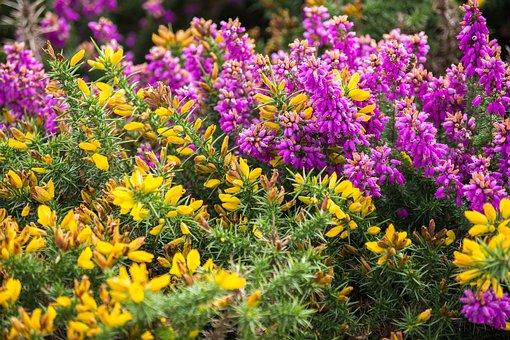 Exmoor, Landscape, England, Nature, Somerset, Flower